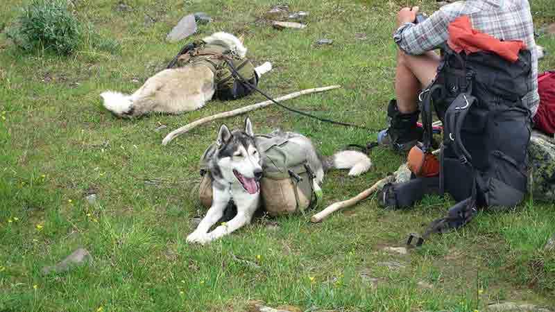 Собаки в туристическом походе
