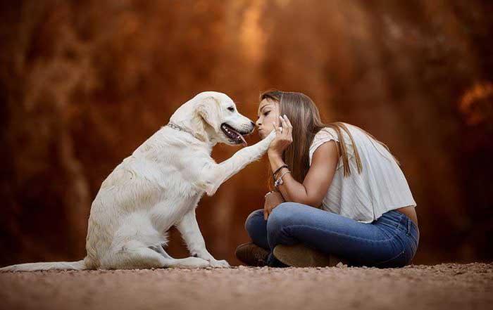 спокойные породы собак