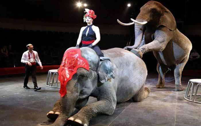 цирк с животными